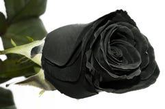 Black Rose Stock Images