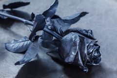 Black Rose. Concept, symbol of sorrow, melancholy and sad mood. Royalty Free Stock Photo