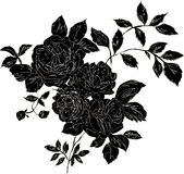 Black rose. Decorative black rose bouquet with outlines, isolated black on white Stock Photo