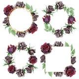 Black rose floral botanical flowers. Watercolor background illustration set. Frame border ornament square. royalty free illustration