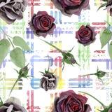 Black rose floral botanical flowers. Watercolor background illustration set. Seamless background pattern. vector illustration