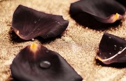 black rose flower petals - wedding, holiday and floral garden styled concept stock photography