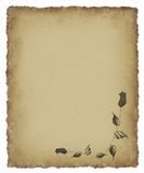 Black Rose on Old Parchment Royalty Free Stock Image