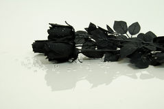 Black Rose reflection Stock Photography