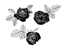 Black roses Stock Photography