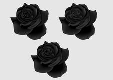 Black roses. Three beautiful black roses in noir style Royalty Free Stock Photos