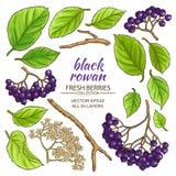 Black rowan elements set Stock Photo