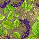 Black rowan vector pattern. On color background Stock Images