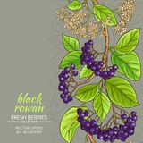 Black rowan vector pattern. On color background Stock Photos