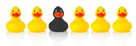 Black rubber duck in a row of yellow rubber ducks Royalty Free Stock Images