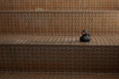 Black rubber duck toy placed on rusty metallic stairs Royalty Free Stock Photo