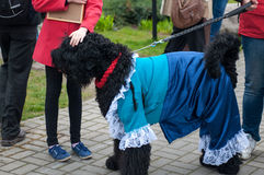 Black Russian Terrier Royalty Free Stock Images