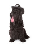 Black Russian Terrier (BRT or Stalin's dog) Royalty Free Stock Photos