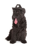 Black Russian Terrier (BRT or Stalin's dog) Royalty Free Stock Images
