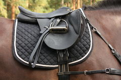 Black saddle on black horse Stock Photography