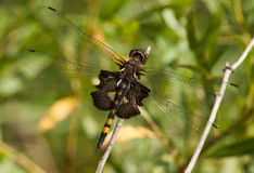 Black Saddlebags Stock Image