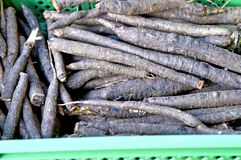 Black salsify Stock Photos