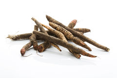Black Salsify on white background Stock Photos