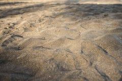 Black sand beach. Volcanic sand beach at Caribbean island Stock Images