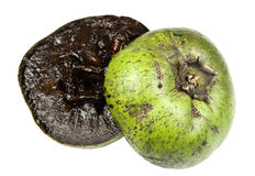 Free Black Sapote Stock Photos - 22539013