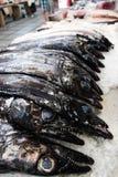 Black scabbard fish Stock Photos