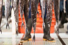 Fish Tails. Long Black Scabbard Fish Tails Royalty Free Stock Photo