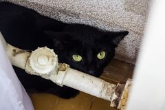Black scared cat hid behind the pipe. Close up stock images