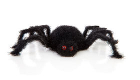 Black scary hairy toy spider. Over white background Royalty Free Stock Images