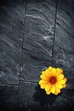 Black Schist Flower Stock Photos