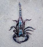 Black scorpion portrait royalty free stock image