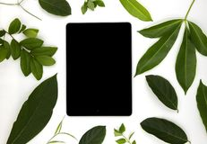 Black screen pad and green summer leaves on white background. User interface of ipad app mockup with green foliage. Gadget pad flat lay photo. Summer decor on stock photography