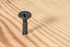 Black screw screwed into wood. Closeup Stock Photos