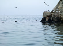 Black Sea Royalty Free Stock Photos