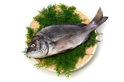 Black sea bream. Cooking ingredient series black sea bream. available for clipping work stock image