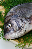Black sea bream. Cooking ingredient series black sea bream. for adv etc. of restaurant,grocery,and others royalty free stock photo