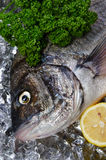 Black sea bream. Cooking ingredient series black sea bream. for adv etc. of restaurant,grocery,and others stock photo