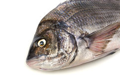 Black sea bream. Cooking ingredient series black sea bream. available for clipping work royalty free stock image