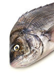 Black sea bream. Cooking ingredient series black sea bream. available for clipping work royalty free stock photos
