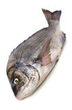 Black sea bream. Cooking ingredient series black sea bream. available for clipping work stock images