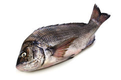 Black sea bream. Cooking ingredient series black sea bream. available for clipping work royalty free stock photo