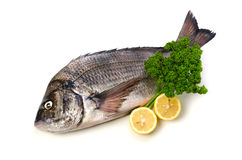 Black sea bream. Cooking ingredient series black sea bream. available for clipping work royalty free stock photography