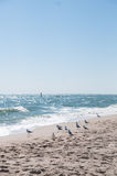 The Black Sea coast. The beach on the Black Sea coast and a gaggle of gulls, sunny summer day Stock Images