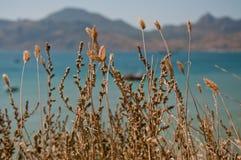 Black Sea coast in Crimea Stock Photography