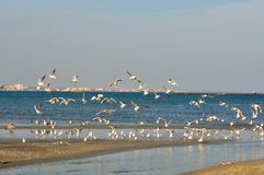 The Black Sea coast and nature , Romania. Rock dam on the Black Sea Coast in Romania, Constanta city. quiet , silence in the nature concept . seagulls and ther stock images