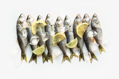 Black sea fresh bluefish on white. Fish pattern with space for text. View from above. Black sea fresh bluefish on white background. Fish pattern. View from above stock image