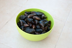 The Black Sea fresh mussels Royalty Free Stock Photos