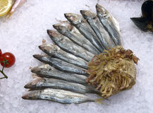 Black Sea horse mackerel on ice. In the window of the restaurant Stock Images