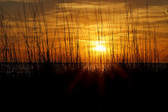 Black Sea Oats Sunset Stock Image
