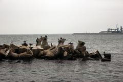 Black Sea och några kormoran Arkivbild