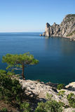 The Black Sea. Pine tree next to the azure sea Stock Photo